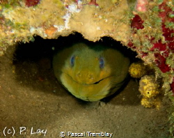 Eel Smile by Pascal Tremblay